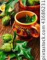 Natural herbs medicine,datura 43686231