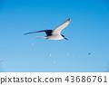 秋季礁 鸟儿 鸟 43686761