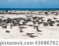 秋季礁 鸟儿 鸟 43686762