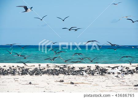秋季礁 鸟儿 鸟 43686765
