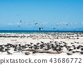 michaelmas cay, bird, birds 43686772