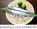 ปลา,วัตถุดิบทำอาหาร,อาหารทะเล 43688580