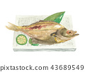 salted and dried overnight, flounder, dried fish 43689549