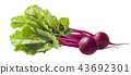 Beetroot with leaves isolated on white background 43692301