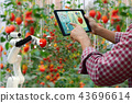 Farmer holding a tablet smart arm robot harvest 43696614