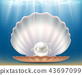 pearl, shell, sea 43697099