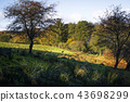 Autumn landscape with a deer at a distance 43698299