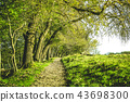Nature trail in a green forest at springtime 43698300
