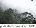 misty jungle forest 43701095