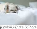 Dog sleep lies on bed in bedroom at home or hotel 43702774