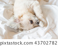 Dog sleep lies on bed in bedroom at home or hotel 43702782