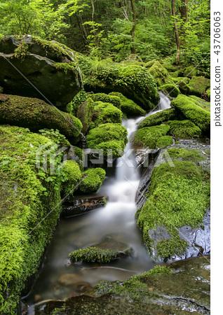 강원도,한국,가리왕산,장전,이끼계곡 43706063