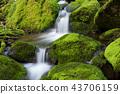 風景 景觀 苔蘚 43706159