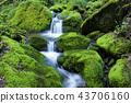 風景 景觀 苔蘚 43706160