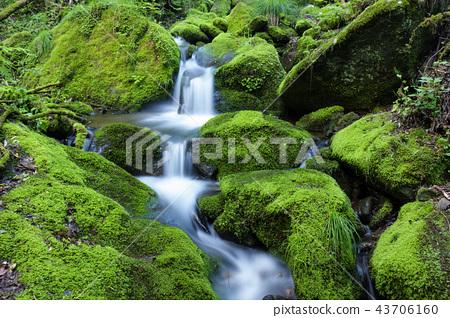 韓國江原道,桑東,莫斯谷 43706160