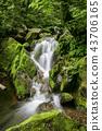 風景 景觀 苔蘚 43706165
