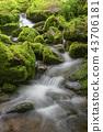 風景 景觀 苔蘚 43706181