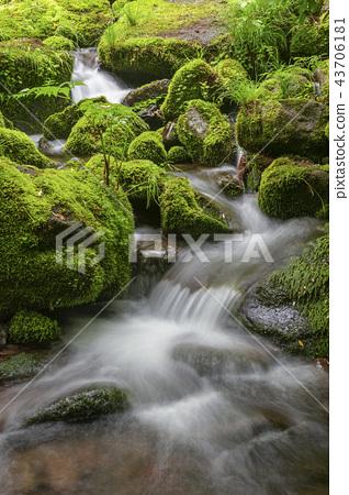 강원도,한국,상동,이끼계곡 43706181