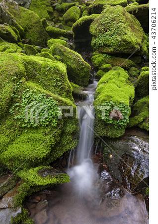 강원도,한국,상동,이끼계곡 43706214
