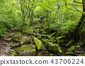 風景 景觀 苔蘚 43706224