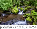 강원도,한국,상동,이끼계곡 43706256