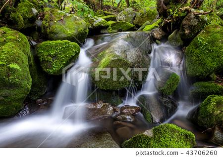 강원도,한국,상동,이끼계곡 43706260