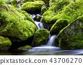 강원도,한국,상동,이끼계곡 43706270