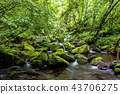 風景 景觀 苔蘚 43706275
