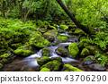風景 景觀 苔蘚 43706290