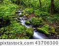 風景 景觀 苔蘚 43706300