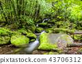 風景 景觀 苔蘚 43706312
