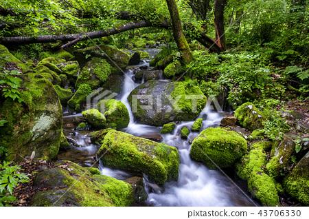 강원도,한국,상동,이끼계곡 43706330