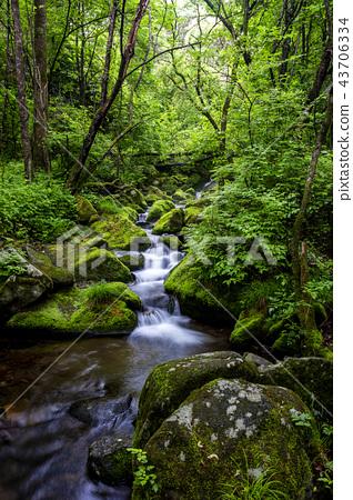강원도,한국,상동,이끼계곡 43706334