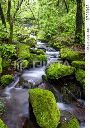風景 景觀 苔蘚 43706343