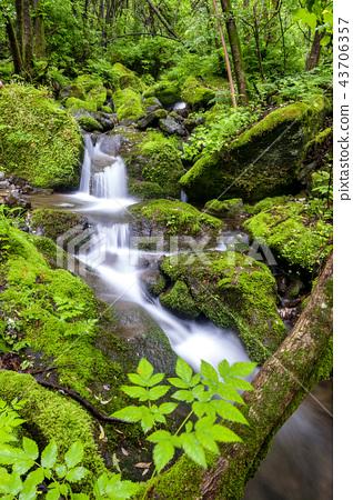 강원도,한국,상동,이끼계곡 43706357