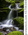 강원도,한국,상동,이끼계곡 43706369