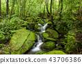 風景 景觀 苔蘚 43706386