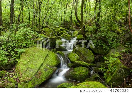 강원도,한국,상동,이끼계곡 43706386