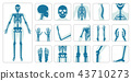 Human bones orthopedic and skeleton icon set 43710273