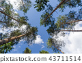 Bright tree tops from low perspective 43711514