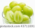 農作物 水果 農業 43711691