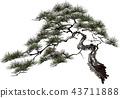 pinetree, old, pine 43711888