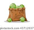 樹葉 甘藍 包菜 43712037