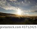 빛나는 초원 43712425