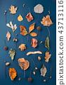 Autumn pattern on dark blue background. 43713116