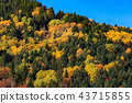 forest, landscape, scenery 43715855