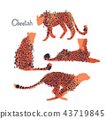 Graphic collection of cheetahs drawn with rough brush 43719845