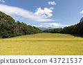 稻田风景 43721537