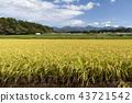 稻田风景 43721542