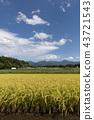 稻田风景 43721543